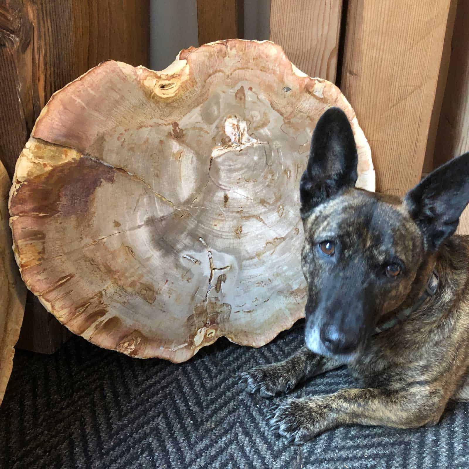 Natural Petrified Wood Set