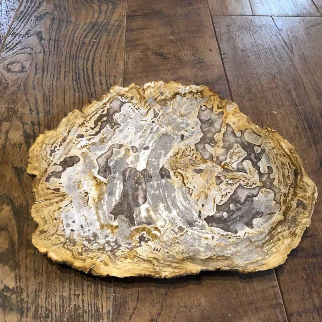 Petrified Wood Plate D 1024x1024 1