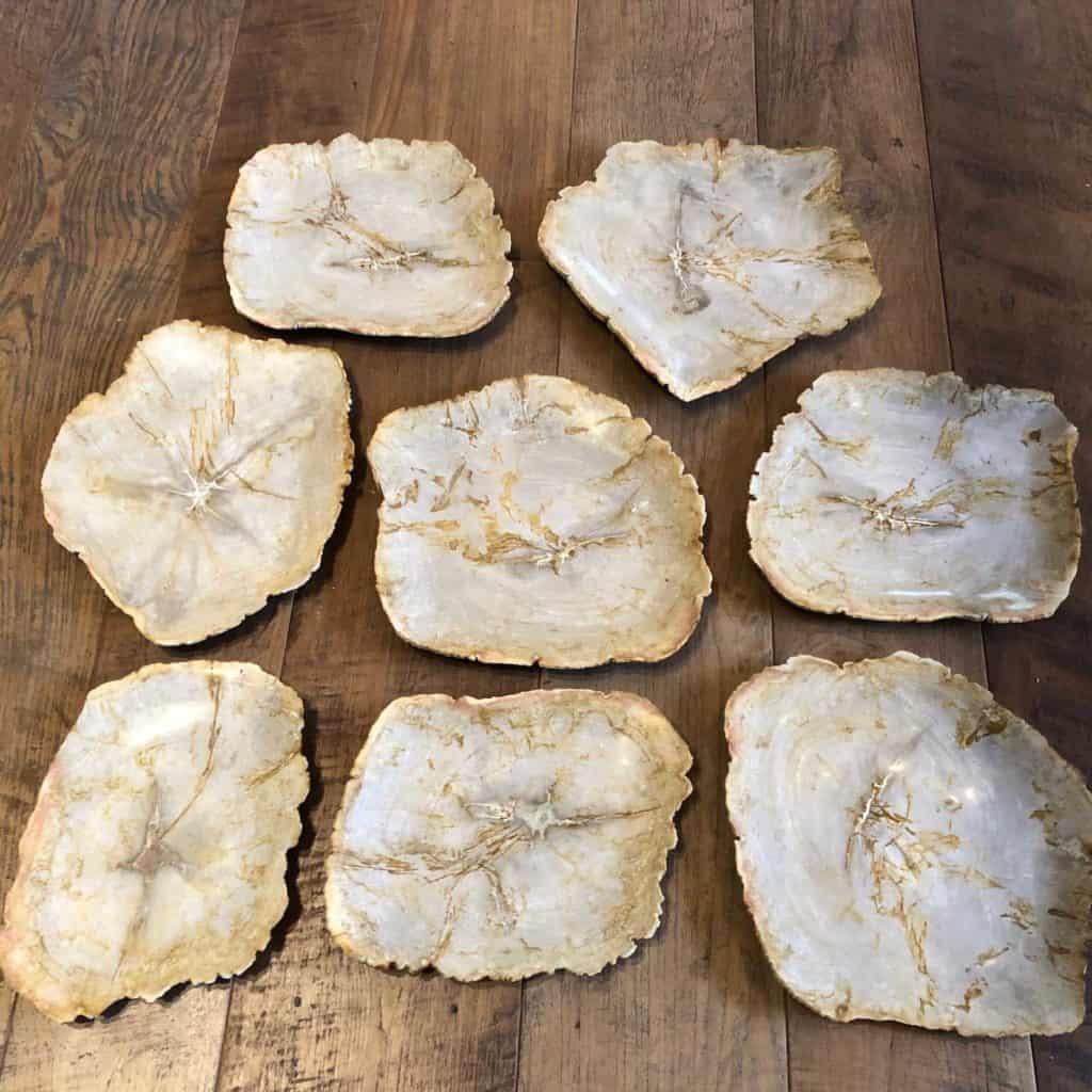 Petrified Wood Plate Group B 1024x1024 1