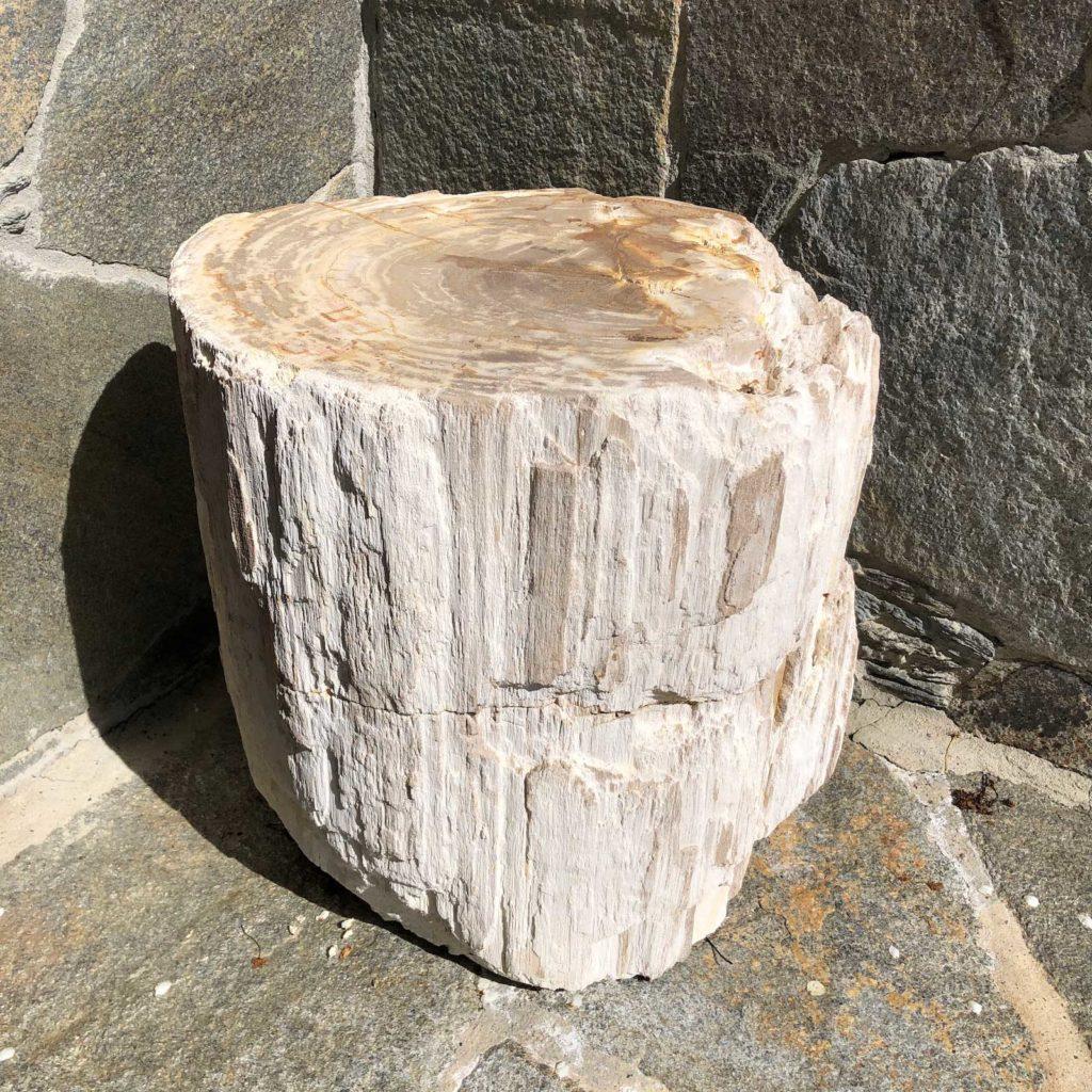 White Stump 1024x1024 1
